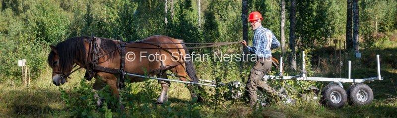 skogskörning häst