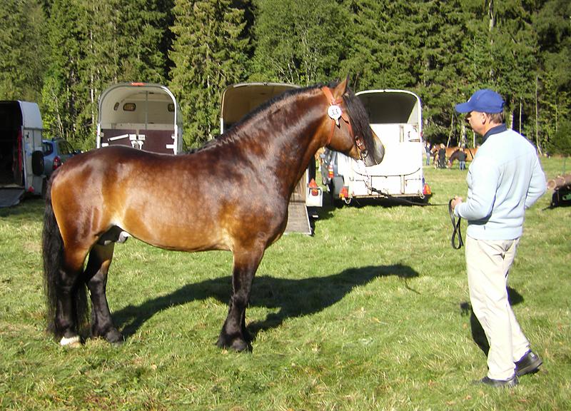 Nordsvensk häst. Via Anne Hummel
