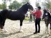 Bondens Dag 2011 - King Size Ebonny (fölet) BIR shire 40 p