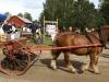 Bondens Dag 2007 - Häst med radsåmaskin