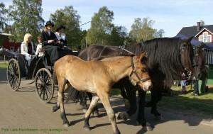 Bondens Dag - Rundtur med häst och vagn